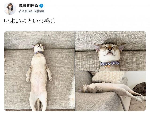 熟睡する猫の寝相が話題  「猫背どこいったw」「ファスナーついてない?」とツッコミ相次ぐ