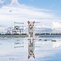 なんて神秘的な風景…ウユニにゃん湖みたい?/Ryostory1124(@photobyRstyle)さん提供