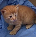 目が感染症ではれた2匹の子猫 母猫が病院までくわえて運ぶ