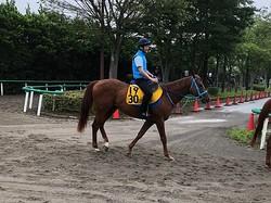【アイビスSD】ライオンボス 破竹の3連勝で重賞タイトル狙う
