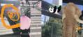 元祖ポケモンGO男「懲りない中年」がiPhoneで「Just a Line」に挑む「日本中で桜を見せたい」(世永玲生)