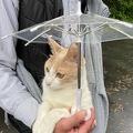 傘を差してお散歩するミルちゃん。可愛過ぎる♡(提供:ゆかみるぼーさん)