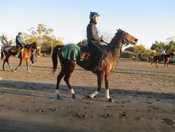 【フェアリーS】アヌラーダプラ ルメールが代打騎乗