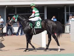 2019コーフィールドカップ(G1)日本馬がオーストラリアに到着