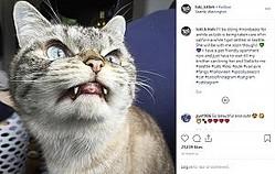 まるでヴァンパイアのようなネコ(画像は『Loki 2019年10月22日付Instagram「I'll be doing throwbacks for awhile as Loki is being taken care of in california while I got settled in Seattle.」』のスクリーンショット)