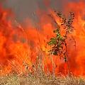 アマゾンの熱帯雨林で観測史上最多の火災、気候変動に影響も