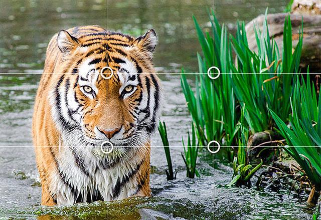 上手に写真が撮れる万能構図 三分割法の実例と使い方