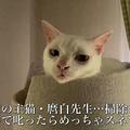 全力で拗ねる猫の顔面力に「猫ってこんなに表情豊かなんだな」
