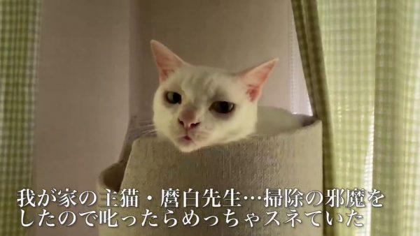 """[画像] 全力でスネる猫…「ふんだ!」と""""今スネています""""と表現する顔面力に「猫ってこんなに表情豊かなんだな」の声"""