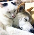 介護猫「くぅ」と認知症の犬「しの」 晴さんのインスタグラム(@hinatabocco.3)より