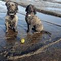 2億年前の化石 英で犬2匹が発見