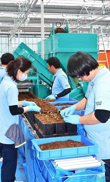 [画像] イチゴ周年栽培 福島に施設完成 一部避難解除の大熊町