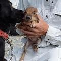 はぐれ「うり坊」飼い犬が救出