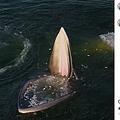 大きな口を開けるクジラ(画像は『Bertie Gregory 2021年1月13日付Instagram「An Eden's whale trap feeding in the Gulf of Thailand.」』のスクリーンショット)