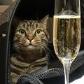 機内に搭乗したミハイル・ガーリンさんの飼い猫ビクトル。ガーリンさんのフェイスブックページより。(c)www.facebook.com/mikhail.galin.7