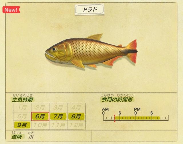 あつ森 六月に釣れる魚