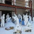 高病原性とみられる鳥インフルエンザが発生した香川県三豊市の養鶏場で殺処分を行う県職員ら=2020年12月2日[同県提供]