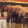 ボツワナ共和国政府が象の大量死について調査結果発表 懐疑的な声も
