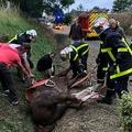 仏北部ノルマンディー地方で、傷つけられ、道路の側溝に倒れる馬を救助する消防隊員ら(2020年7月9日撮影、9月7日公開)。(c)FAMILY HANDOUT / AFP