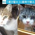 露の「運び屋ネコ」裁判で替え玉
