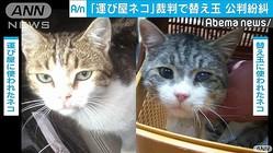 """違法薬物""""運び屋のネコ"""" 裁判で替え玉が発覚"""