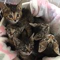 土の中に埋められていた子猫たち 救出者が訴える「違法」の重み