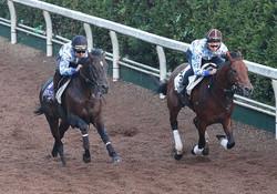 坂路で併せ馬で追い切るダイアトニック(左)