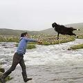遠くの川へ投げ入れ、羊がすぐに戻れないようにして体を洗う