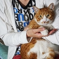 現行の介護保険制度ではヘルパーは世話できず ペットを飼う高齢者のリスク