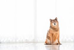 なぜ「犬離れ」が進んでいるのか