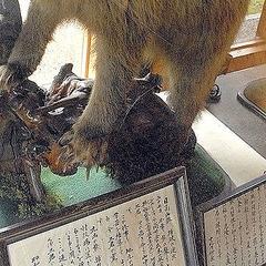 ヒグマ 部 福岡 事件 フォーゲル 大 ワンダー