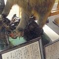 昭和45年に起きた3人死亡のヒグマ襲撃事件 生還者は今でも眠れない夜