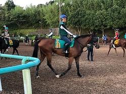 【注目新馬】カトゥルスフェリス  ディープの良血馬が始動