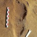 フランス・ルロゼルで発見されたネアンデルタール人の足跡。ドミニク・クリケ氏提供(撮影日・提供日不明)。(c)AFP=時事/AFPBB News