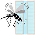 虫を防ぐ網戸や窓の上手な使い方 窓「半開き」との使い方はNG