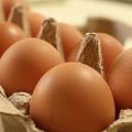 新鮮なら水に沈む 卵の見分け方