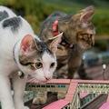 ジオラマを闊歩する猫たち…さながら怪獣映画のようです(提供/ジオラマ食堂てつどうかん)