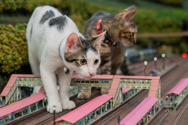 [画像] 巨大猫が出現!鉄道が襲われた!? ジオラマを闊歩する保護猫親子に衝撃 コロナで経営危機の食堂も救う