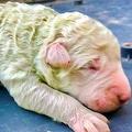 緑色の子犬、ピスタチオと命名01