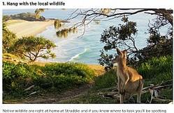野生のカンガルーが見られるノースストラドブローク島(画像は『Visit Brisbane「42 THINGS TO DO AT NORTH STRADBROKE ISLAND」』のスクリーンショット)