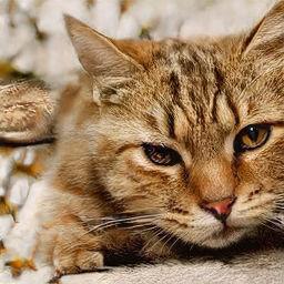 この世に存在しない 架空の猫 の写真を自動生成しまくれる This Cat Does Not Exist ライブドアニュース
