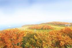 美しく広がる紅葉を見に行こう!/写真は主催者提供