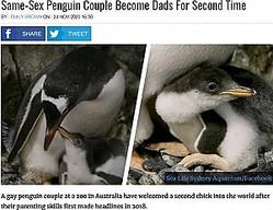 オスの同性ペンギンカップルによって孵化に成功したヒナ(画像は『UNILAD 2020年11月24日付「Same-Sex Penguin Couple Become Dads For Second Time」(Sea Life Sydney Aquarium/Facebook)』のスクリーンショット)
