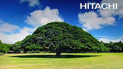 日立はTVCM「この木なんの木」の日立の樹に毎年4500万円以上支払っている