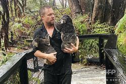 オーストラリア爬虫類公園で、洪水の中コアラを避難させる職員。同園提供(2020年1月17日撮影、入手)。(c)AFP PHOTO / AUSTRALIAN REPTILE PARK