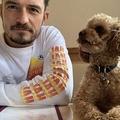 オーランド・ブルームが行方不明の愛犬の死を報告 首輪のみ発見