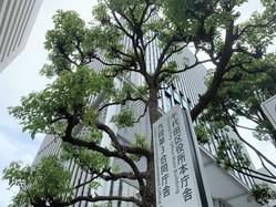 千代田区役所が入る庁舎(7月27日)