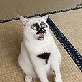 顔の模様が超ユニーク SNSでも話題の「クセが強い」看板猫