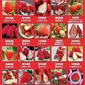 ららぽーと豊洲でイチゴ無料提供