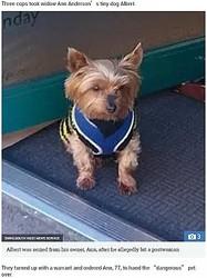 歯が4本のヨークシャーテリア、郵便配達人に噛みつく(画像は『The Sun 2018年9月11日付「YORKSHIRE NIPPER Tiny Yorkshire terrier with just four teeth was seized from its owner for 'biting a postwoman'」(IMAGE: SWNS:SOUTH WEST NEWS SERVICE)』のスクリーンショット)